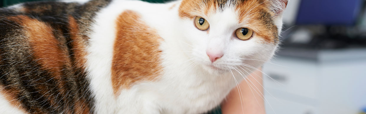Stress in your cat and dog